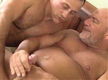 Horny Bears